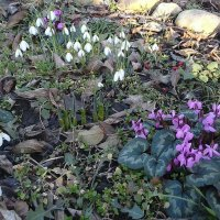 Весна в Краснодаре! В феврале! :: Светлана Масленникова