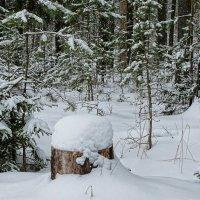 Снежный и тёплый февраль :: Милешкин Владимир Алексеевич