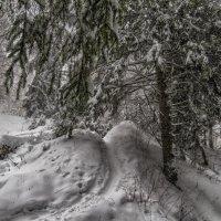 Февраль-кривые дорожки :: Сергей Цветков