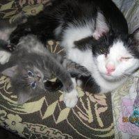 Коты :: Smit Maikl