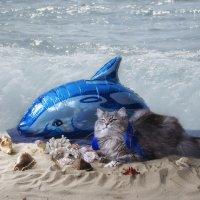 Дельфин и русалка.... :: Ирина Приходько