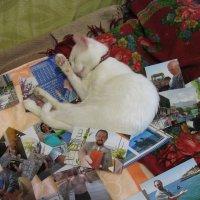 """Кто спит, тот обедает...(Французская поговорка) Т.е. """"поедает"""" энергию Космоса! :: Алекс Аро Аро"""