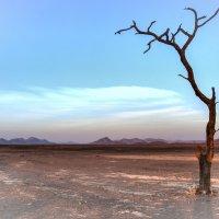 бывшее озеро Deadvlei, вода исчезла 300 лет назад :: Георгий А