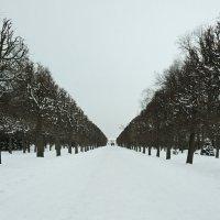Снежные аллеи... :: tipchik