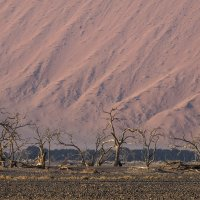 высохшие дерева на фоне дюны :: Георгий