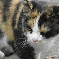Кошка :: Ольга Беляева