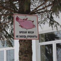 Памятка для любителей мусорить :: Дмитрий Солоненко