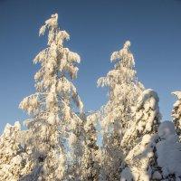 Зима :: Александр Яковлев
