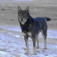 Поселковый пёс :: Маргарита Батырева