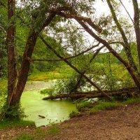 Болото зелёное в ряску одето, щебечет над ним зелёное лето. :: Алла Кочергина
