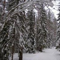 На недельку до второго я уеду в Комарово.... :: tipchik