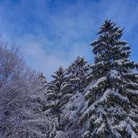 Снежный февраль :: Ольга