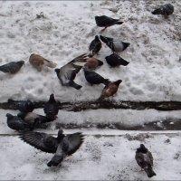 Голуби зимней порой :: Нина Корешкова