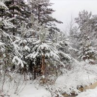 Колючий лес. Фотографировала Саша :: Фотогруппа Весна.