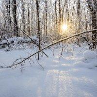 Зима... :: Влад Никишин