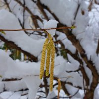 """""""...Изменчивый месяц февраль - Он любит весну, и зимы ему жаль..."""" :: Galina Dzubina"""