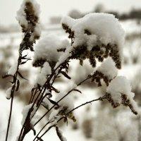 Метель снежком укутала- смотри не замерзай... :: Vladimir Semenchukov