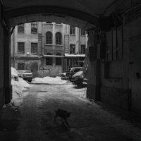 Тени котов в петербургских подворотнях :: Дмитрий Б.