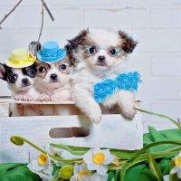 Весенние крошки! :: Катерина Терновая