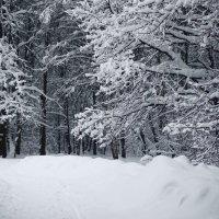 мороз крепчает :: Александр Матюхин