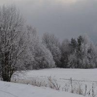 зима седая :: Светлана