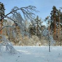 в зимнем лесу :: Александр Прокудин