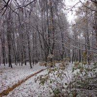 зимний парк :: Наталья Сазонова