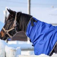 Лошадки из Атк Богдарня :: Кристина Щукина