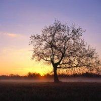 Рязанская область, Мещёра, рассвет 9 мая 2017 года. :: Игорь Олегович Кравченко