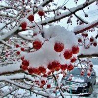 После снегопада :: Владимир