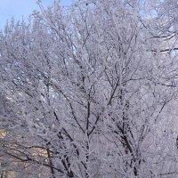 Зима...и на деревьях красота... :: Наталия Павлова