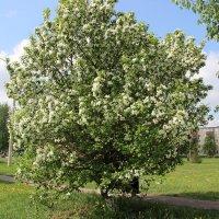 Весна. :: венера чуйкова