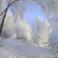 Зимние зарисовки :: galina tihonova