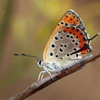 Утренняя бабочка :: Николай Волков