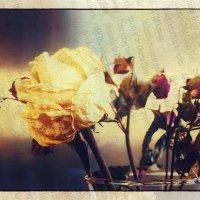 - Что помнишь ты, сухая роза?.. :: Ирина Сивовол