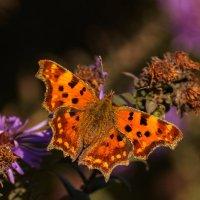 Осенние краски :: Павел Руденко