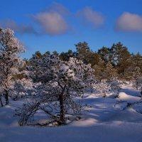 Лес уснул до будущей весны,утопая в снеговой постели :: Татьянка *
