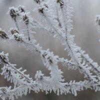 Морозное серебро :: Swetlana V
