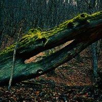 лес :: Marika Hexe