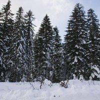 в лесу :: Светлана Бурлина
