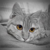 Заведу я себе кота.... :: Людмила Богданова (Скачко)