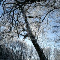 Зима после Масленицы :: Sergey Polovnikov