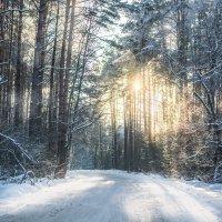 Солнце в зимнем лесу :: Анастасия Жигалёва