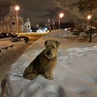 Кто-то из мелких в снегу закопался... :: Лара Симонова