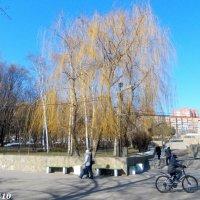 Ростов-на-Дону... парк у водохранилища :: Нина Бутко