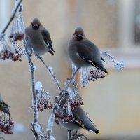 Морозное трио :: Олег Гулли