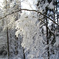 Тяжесть снега :: Андрей Снегерёв