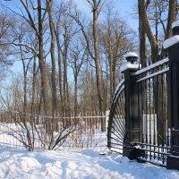 Стражи старого парка.... :: Tatiana Markova