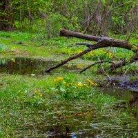 Весна в лесу :: Владимир Лазарев