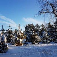 Последний день зимы... А завтра будет март... :: Ольга Русанова (olg-rusanowa2010)